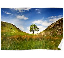 Sycamore Gap on Hadrian's Wall Poster