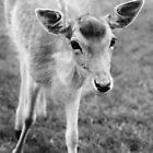 Hello Deer by Ladymoose