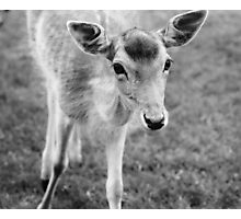 Hello Deer Photographic Print