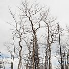 ghost forest by helveticaneue