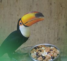 A great shot of a toucan by stefanjb