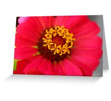 Golden Stars in Red Zinnia Greeting Card