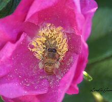 To Bee or Not To Bee by Lorelle Gromus