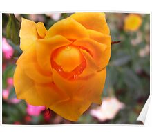 Little yolk rose Poster