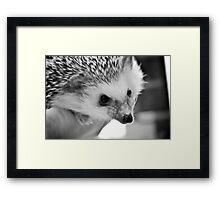 Hedgehog Love Framed Print