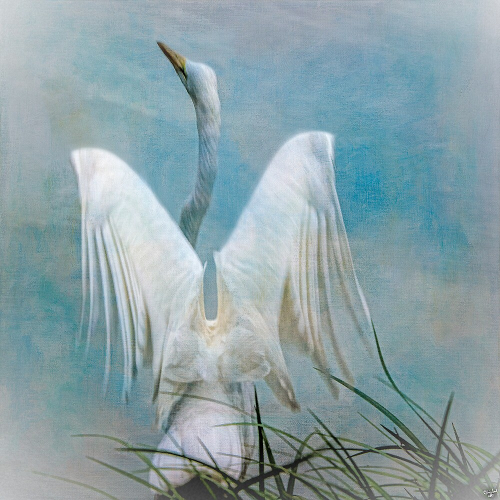 Egret Preparing to Launch by Chris Lord
