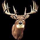 Mule Deer Head by Walter Colvin