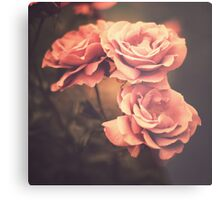 Three Pink Roses (Vintage Flower Photography) Metal Print