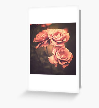 Three Pink Roses (Vintage Flower Photography) Greeting Card