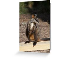 Brush Tailed Rock Wallaby Greeting Card