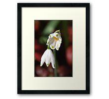 Snowdrops Framed Print