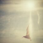Seagull by colinrac