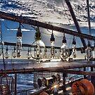Squid Lights by John Sharp