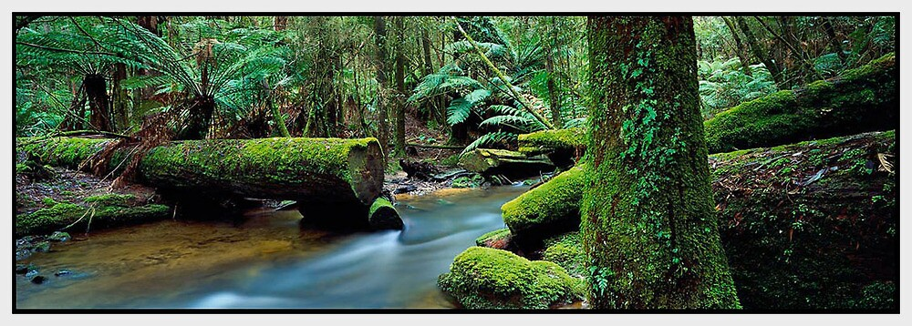 Heart of the Forest, Mount Field National Park TAS by Chris Munn