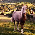 Farm Horse by Michael Haslam