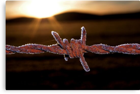 Wire'n'ice by Penny Kittel