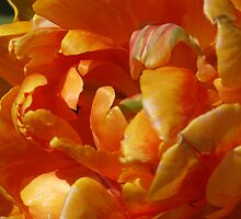 Orange Ruffles by Aileen David