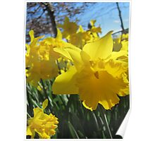Wedding Day Daffodils Poster