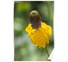 Yellow Ratibida columnifera Poster