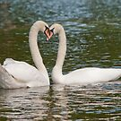 Swan Love by Margaret S Sweeny