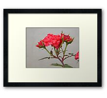 Red button Roses Framed Print