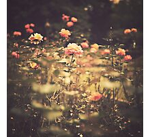 One Rose in a Magic Garden (Vintage Flower Photography) Photographic Print