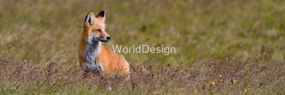 Foxy Panorama by Sheri L Gladish