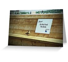 Please Do Not Feed the Birds Greeting Card