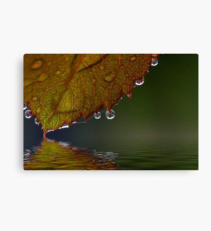 Slightest Touch Canvas Print