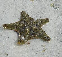 Starfish by Carlo Marandola
