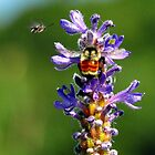 Bees and Pickerelweed by Nancy Barrett