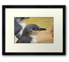 Beautiful Penguin close up. Framed Print