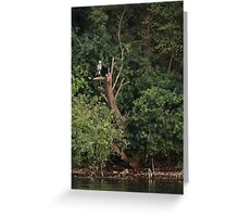 Great Blue Heron in Tree Greeting Card