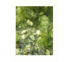 Underwater Vegetation 511 Art Print