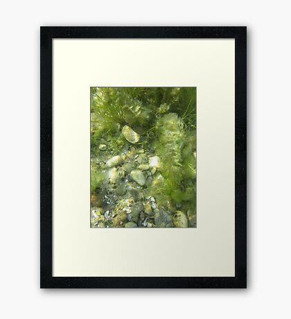 Underwater Vegetation 511 Framed Print