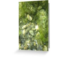 Underwater Vegetation 511 Greeting Card