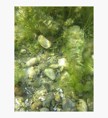 Underwater Vegetation 511 Photographic Print