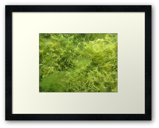 Underwater Vegetation 514 by Thomas Murphy