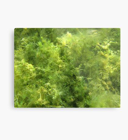 Underwater Vegetation 515 Metal Print