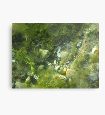 Underwater Vegetation 520 Metal Print