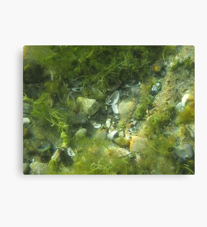 Underwater Vegetation 520 Canvas Print