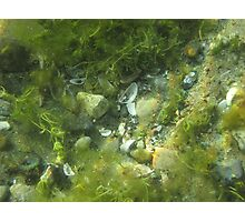 Underwater Vegetation 520 Photographic Print