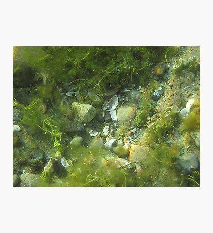 Underwater Vegetation 520 Photographic Print