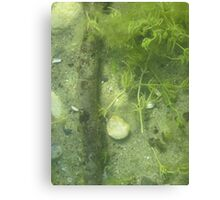 Seaweed Chicken Monster Canvas Print