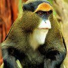 Debrazza's Monkey, With An Attitude by SuddenJim