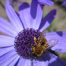 Honey, Honey! by MidnightMelody