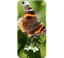 Red Admiral Butterfly Portrait iPhone Case/Skin