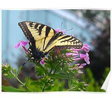 Beautiful Swallowtail Poster