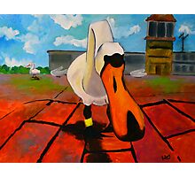 Silly Goose Photographic Print
