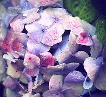 Vintage Hydrangea by rafstardesigns